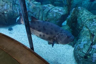 2015-06-07 Aquarium Visit
