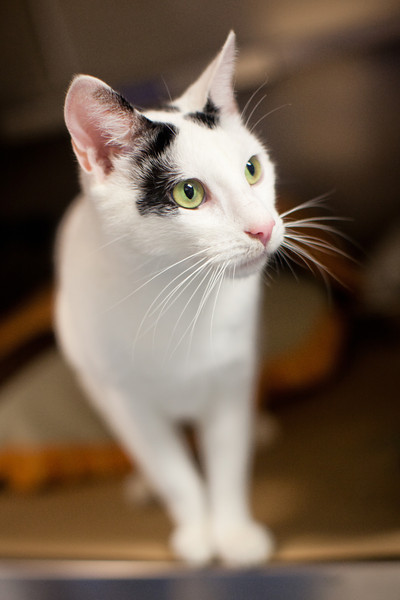 Animal Shelter Charity Portraits