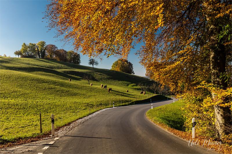 2016-10-31 Herbst Aargau - 0U5A1696.jpg
