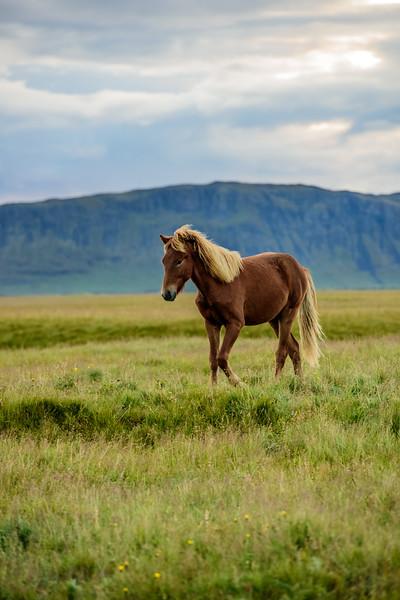 20180824-31 Iceland 477.jpg