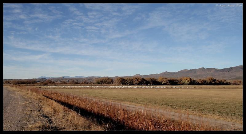 Typical scape of Bosque Del Apache, Socorro, New Mexico, November 2010
