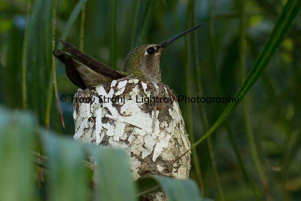 Winter Plant blossoms & Humming Bird Nest  2-10-2012
