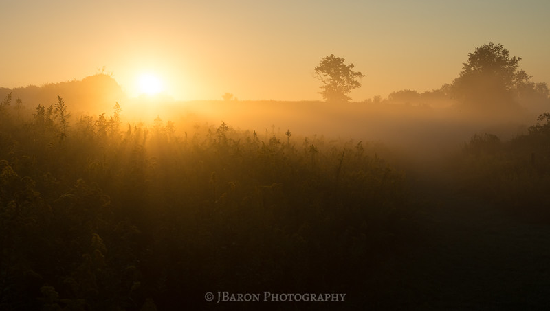 Sunrise over a Field of Goldenrod
