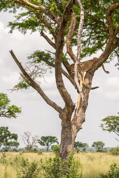 Uganda_T_QE-1525.jpg