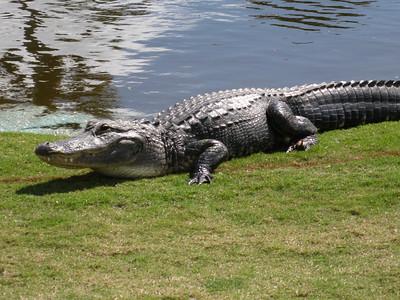Florida Jan 2009