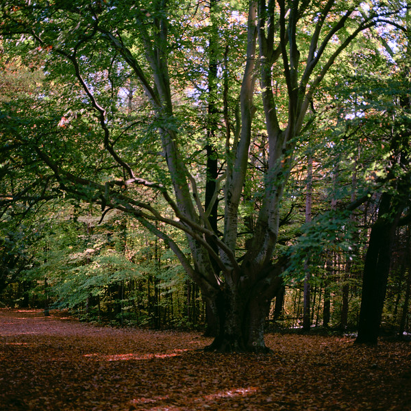 Autumn Hike 120 Film-00058.jpg