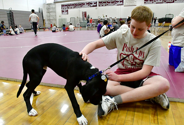 3/8/2019 Mike Orazzi | Staff Gabriel Buden pets Zeus during Push Up for Patriots at Bristol Central High School Friday afternoon.