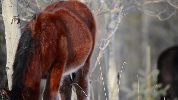 12 2013 Dec 23 Alberta Wild Horse Videos - For VH