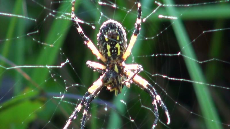 spider_02.mov
