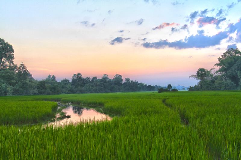 Cambodia Rice field.jpg