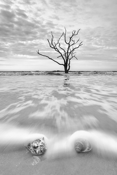 Tree and shells2-1.jpg