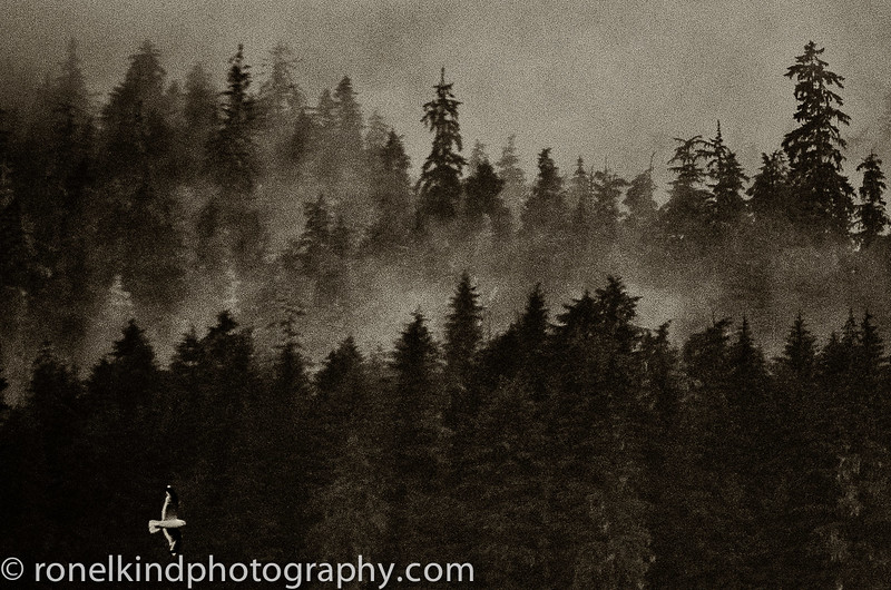 Alaska-0241.jpg