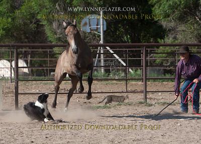 Rushcreek Arabians-Downloadable Proofs
