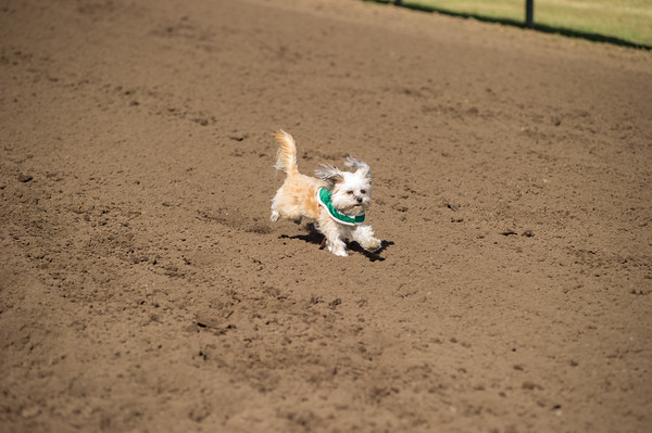 Derby Dog Dash