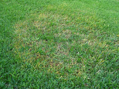 the-best-way-to-fight-brown-patch-in-st-augustine-grass-is-through-prevention