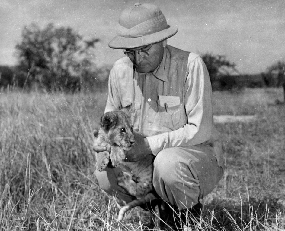 . MAR 21 1950  Ernie Perrine poses with metro, the 2-month-old lion cub orphaned when its mother had to be shot as it ambushed Perrine and White hunter Frank Bowman.   Credit: Denver Post