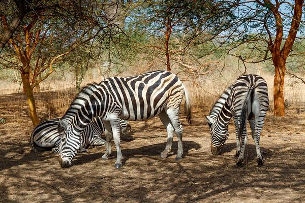 Wildlife in Senegal