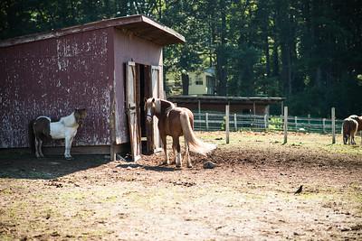 PV Farm Stand