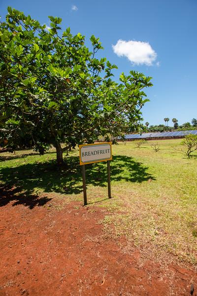 Hawaii2019-612.jpg