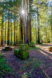 Redwoods@SPTaylor SP