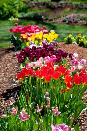 arboretum spring 2016