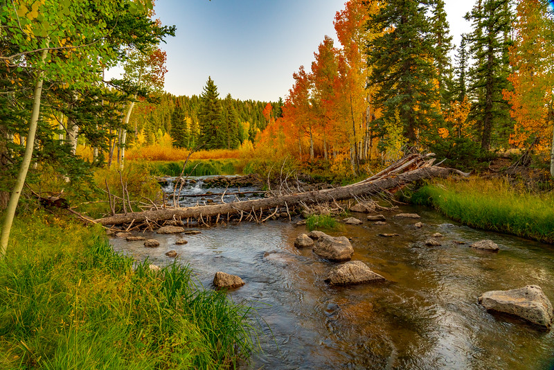 Fallen Log Across Duck Creek in Autumn