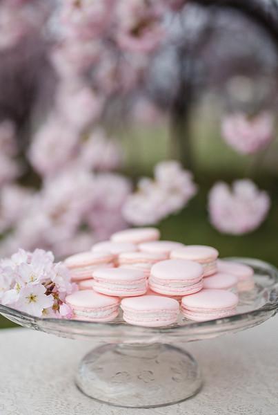 Cherry Blossoms (152 of 182).jpg