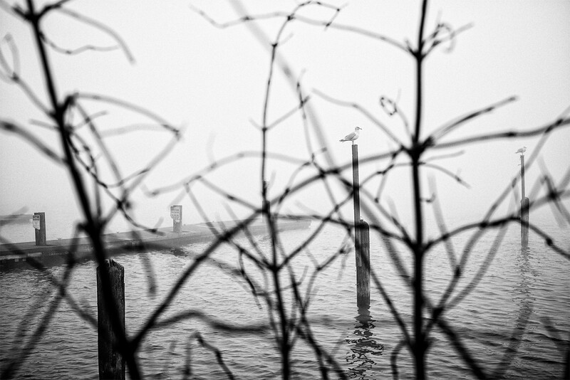 Seagulls on pilings on a foggy morning at Alki beach