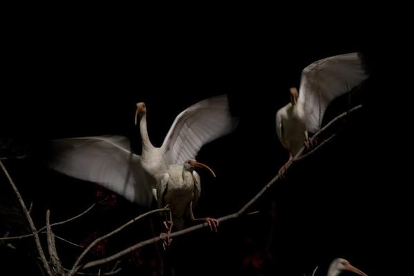 Birds- Citadel