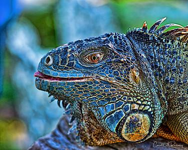 Kowiachobee Animal Reserve 2012