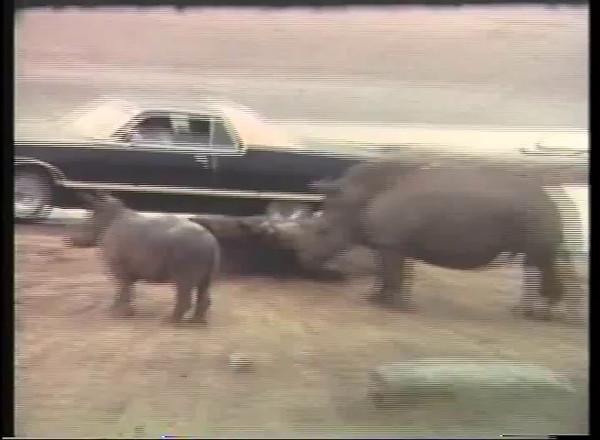 Videos 1970