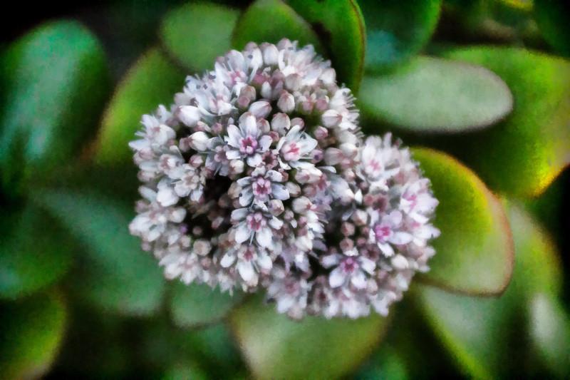 jan 8 - flower.jpg