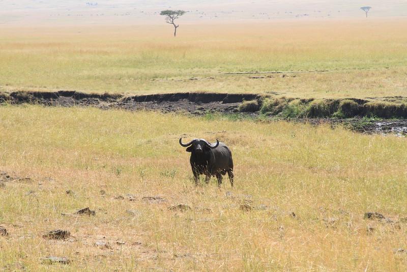 Kenya Part2 '15 615.JPG