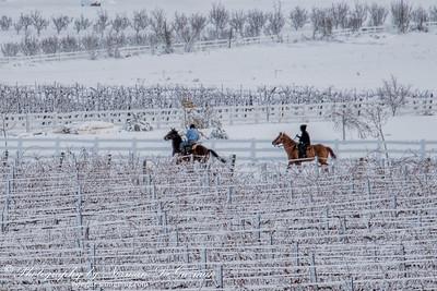 Murrieta Winter Bliss