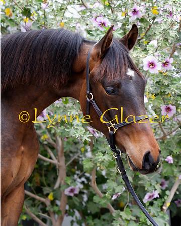 Rocking Horse Arabians Prints