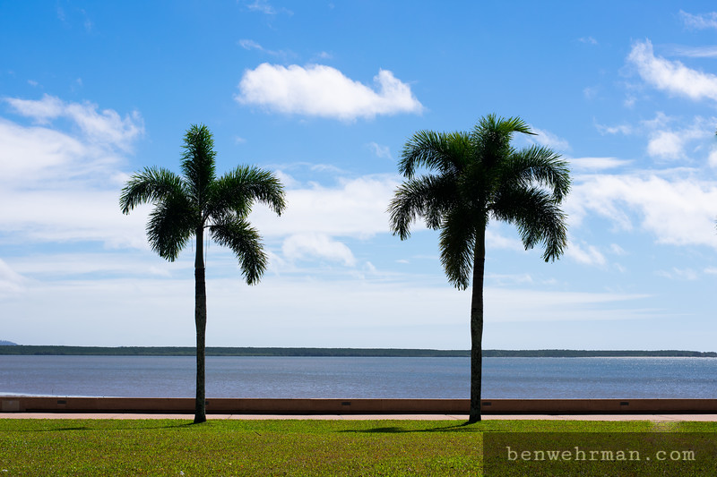 Two palm trees with ocean behind