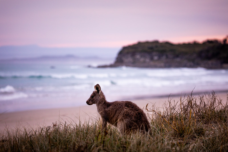 2G2A4457- Callum Snape - Kangaroo Beach.jpg