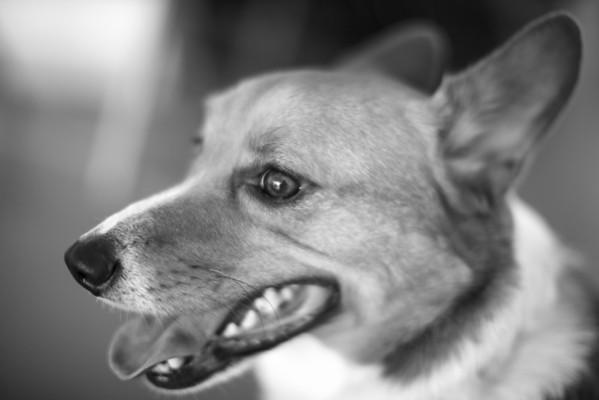 Jerilyn's Dog Max