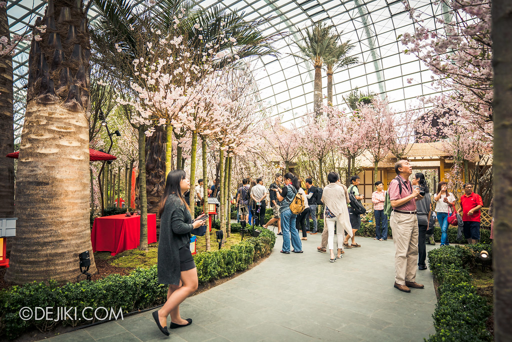 Gardens by the Bay - Blossom Bliss floral display / crowds walkways