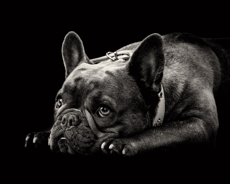 Pets_PhilHawley_072.jpg