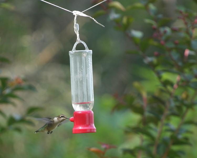 Baiting Hollow Hummingbird Sanctuary