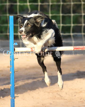 Contact Point AKC Agility Trial Feb 2012 - Friday/Excellent only