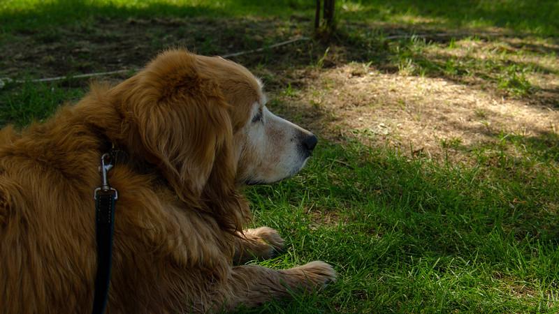 PuppyParty18-545.jpg