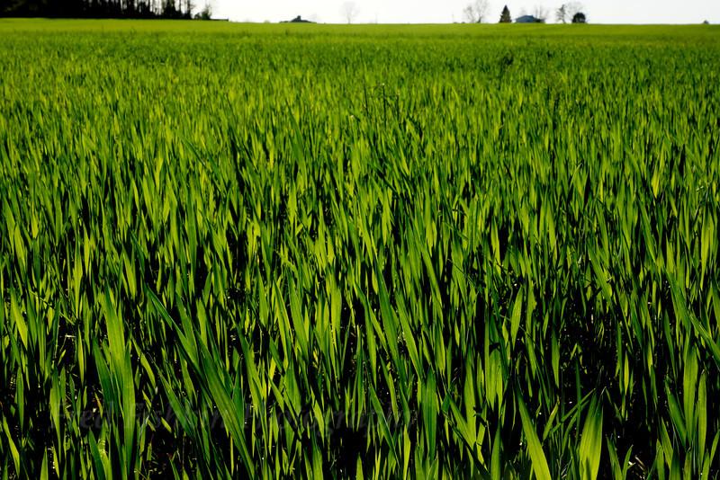 clayton field.jpg