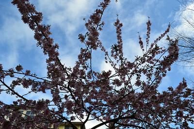 2011_04_02 - Bellevue