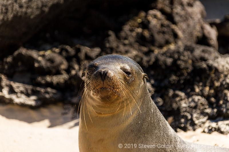 Galapagos 0719 SJGoldin-1559.jpg