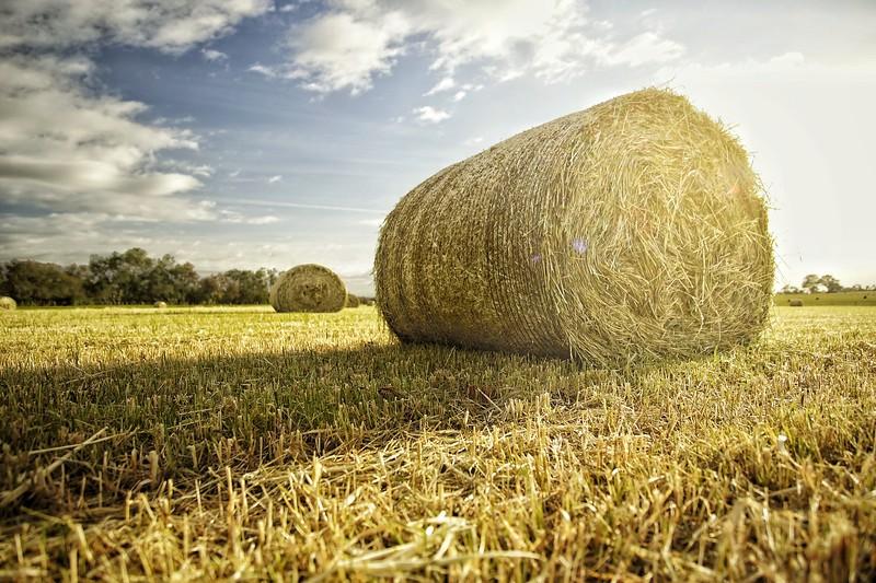 Rural Photography - Fresh Harvest