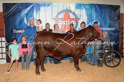 Junior Breeding Heifer Backdrop