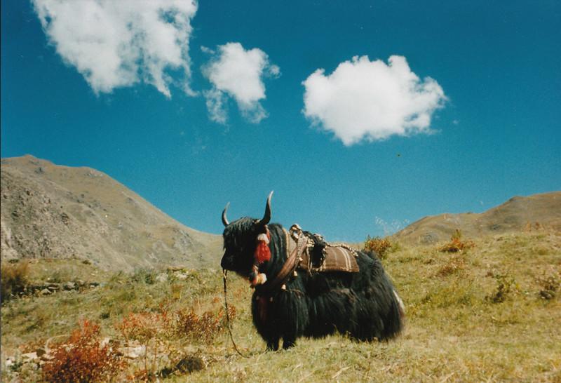 tibet_0095.jpg