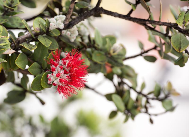 Summit Flower 1